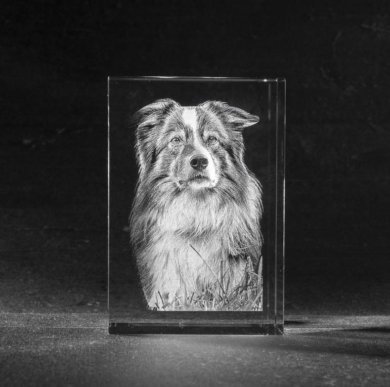 3D Foto in Glas - Kristal Blok met 1 portret van huisdier / hond